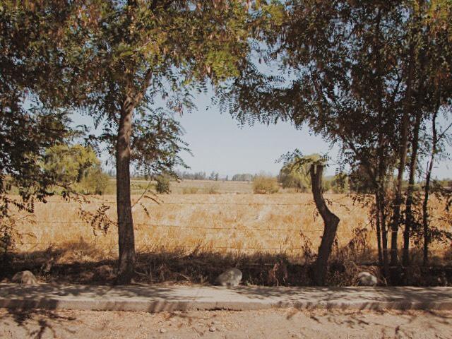 Entorno rural_1